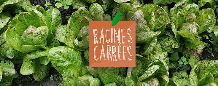 Logo Racines Carrées
